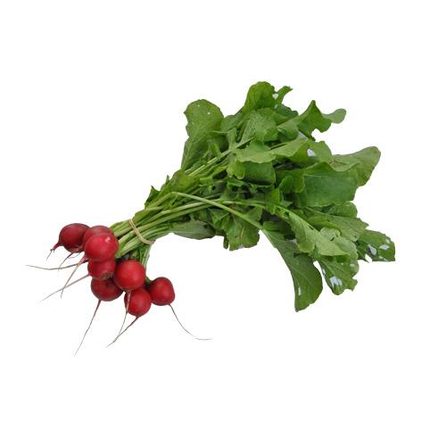 radis-printemps